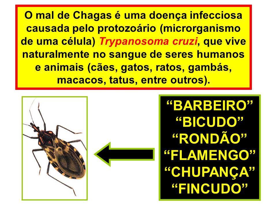 O mal de Chagas é uma doença infecciosa causada pelo protozoário (microrganismo de uma célula) Trypanosoma cruzi, que vive naturalmente no sangue de seres humanos e animais (cães, gatos, ratos, gambás, macacos, tatus, entre outros).