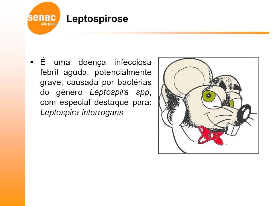 Leptospirose É uma doença infecciosa febril aguda, potencialmente grave, causada por bactérias do gênero Leptospira spp, com especial destaque para: Leptospira interrogans