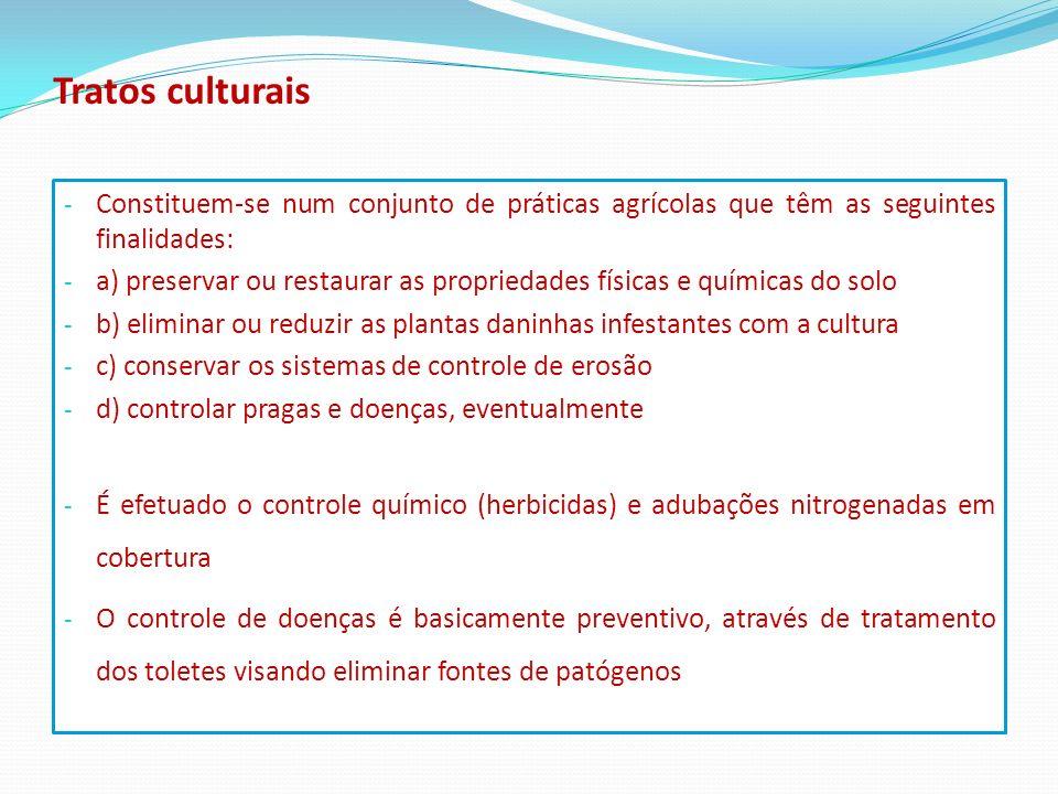 Tratos culturais - Constituem-se num conjunto de práticas agrícolas que têm as seguintes finalidades: - a) preservar ou restaurar as propriedades físi