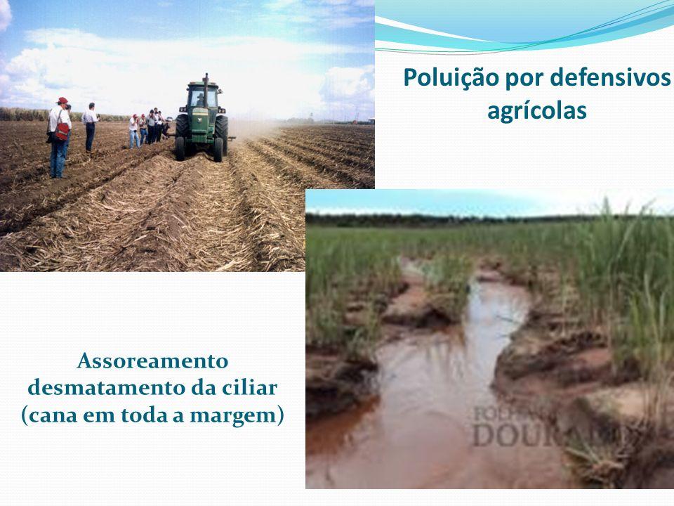 Poluição por defensivos agrícolas Assoreamento desmatamento da ciliar (cana em toda a margem)