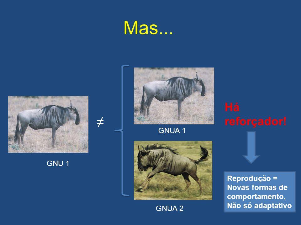Mas...GNU 1 GNUA 1 GNUA 2 Há reforçador.