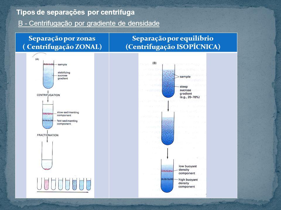 B - Centrifugação por gradiente de densidade Separação por zonas ( Centrifugação ZONAL) Separação por equilíbrio (Centrifugação ISOPÍCNICA)