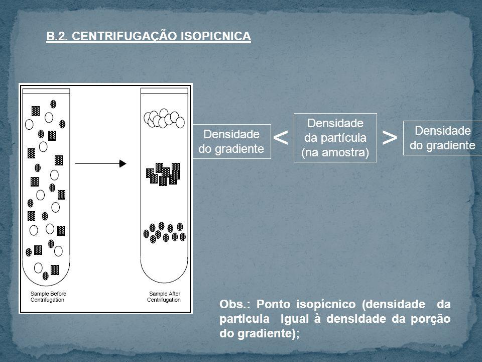 B.2. CENTRIFUGAÇÃO ISOPICNICA Densidade da partícula (na amostra) Densidade do gradiente <> Obs.: Ponto isopícnico (densidade da particula igual à den