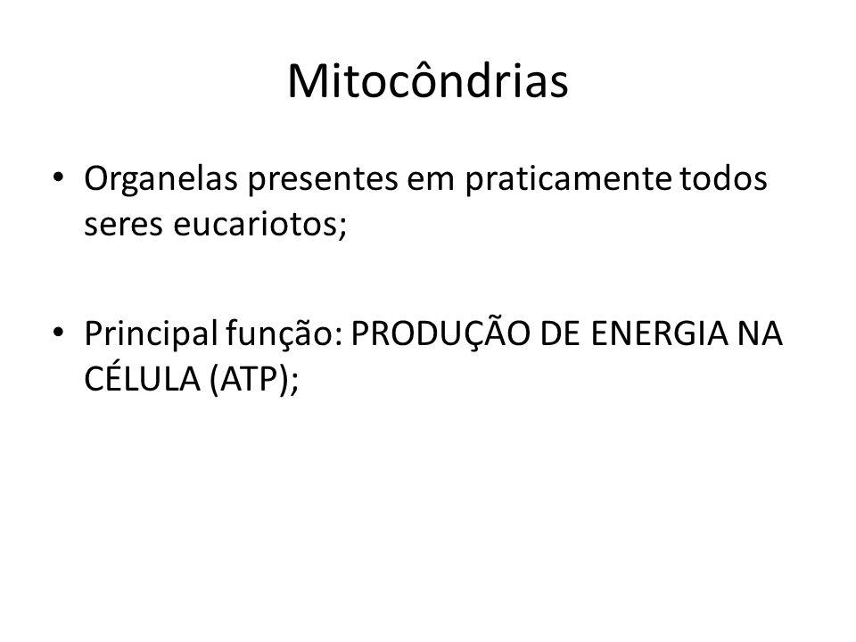 Exercícios pergunta:Numa célula especializada na produção de energia espera-se encontrar grande número de: a) cílios X b) mitocôndrias c) nucléolos d) ribossomos e) corpos de Golgi