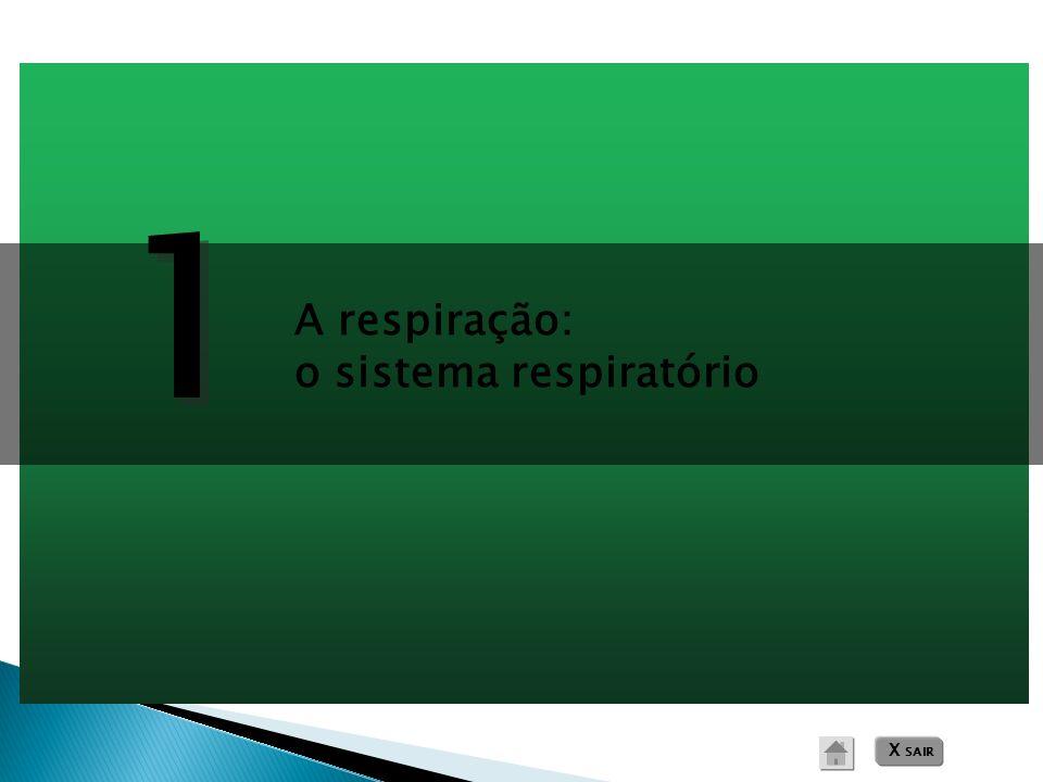1 1 A respiração: o sistema respiratório X SAIR