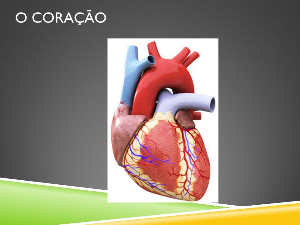 Curiosidades sobre o coração humano - Em repouso, uma pessoa tem o sangue bombeado pelo coração, por todo corpo, em aproximadamente 50 segundos.