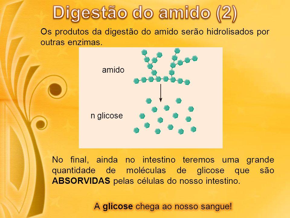Os produtos da digestão do amido serão hidrolisados por outras enzimas. amido n glicose