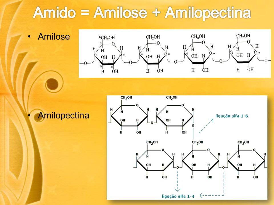Amilose Amilopectina