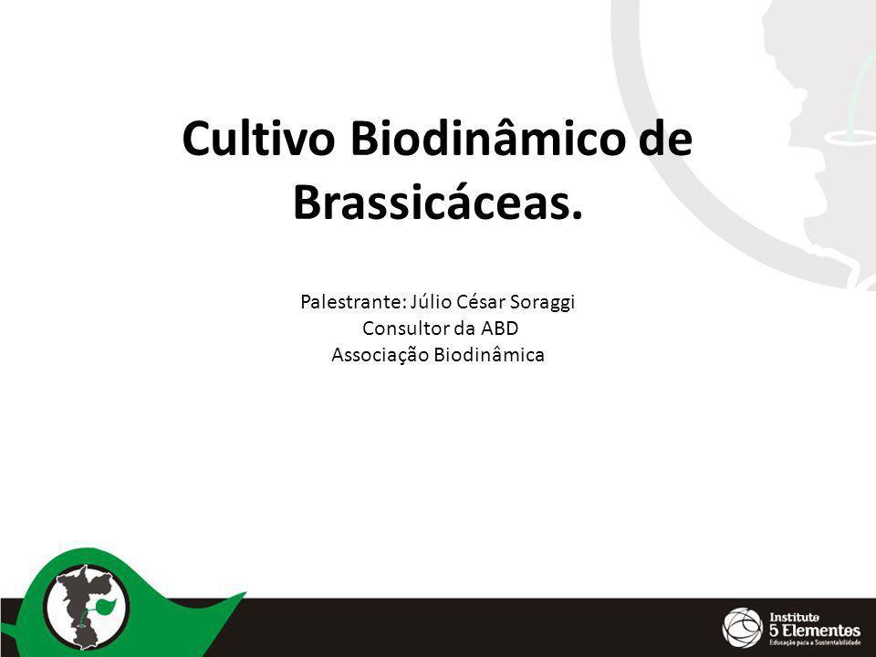 Cultivo Biodinâmico de Brassicáceas. Palestrante: Júlio César Soraggi Consultor da ABD Associação Biodinâmica