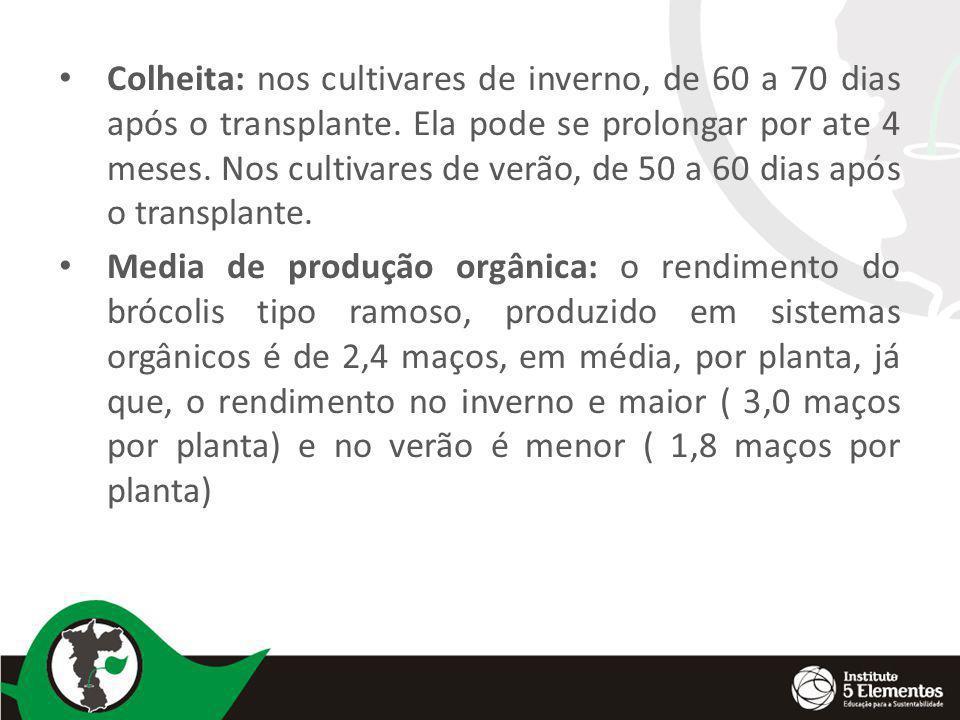 Colheita: nos cultivares de inverno, de 60 a 70 dias após o transplante. Ela pode se prolongar por ate 4 meses. Nos cultivares de verão, de 50 a 60 di