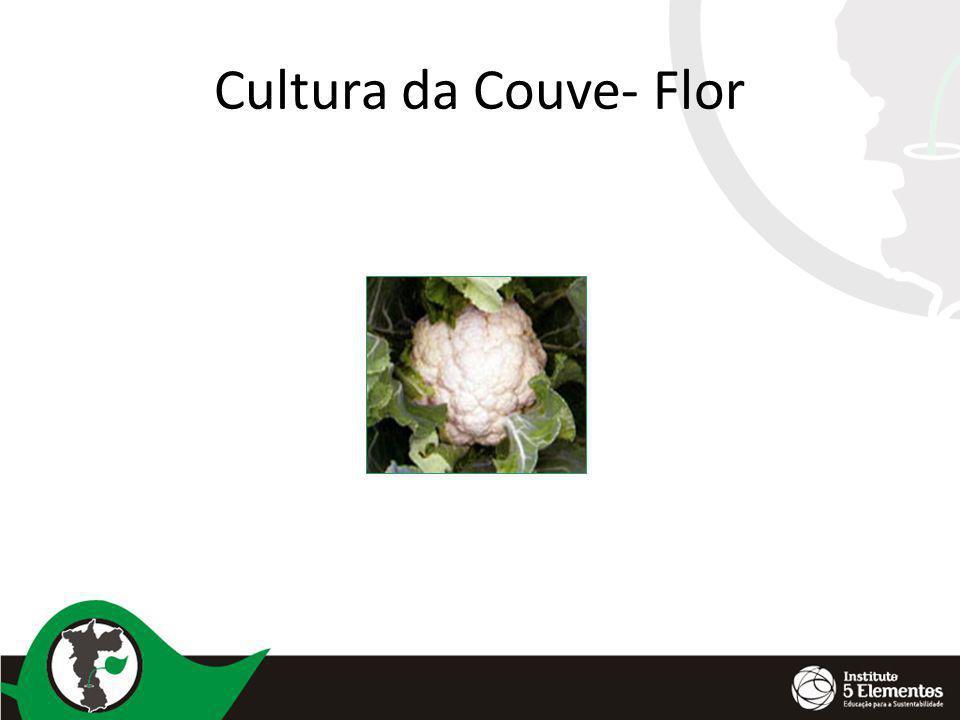 Cultura da Couve- Flor