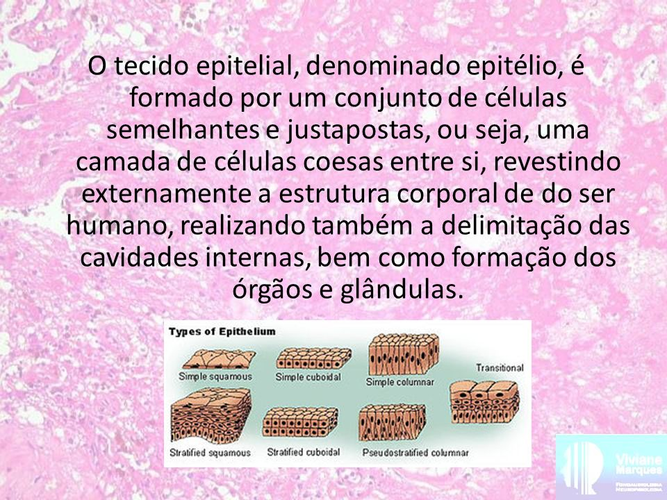 O tecido epitelial, denominado epitélio, é formado por um conjunto de células semelhantes e justapostas, ou seja, uma camada de células coesas entre s