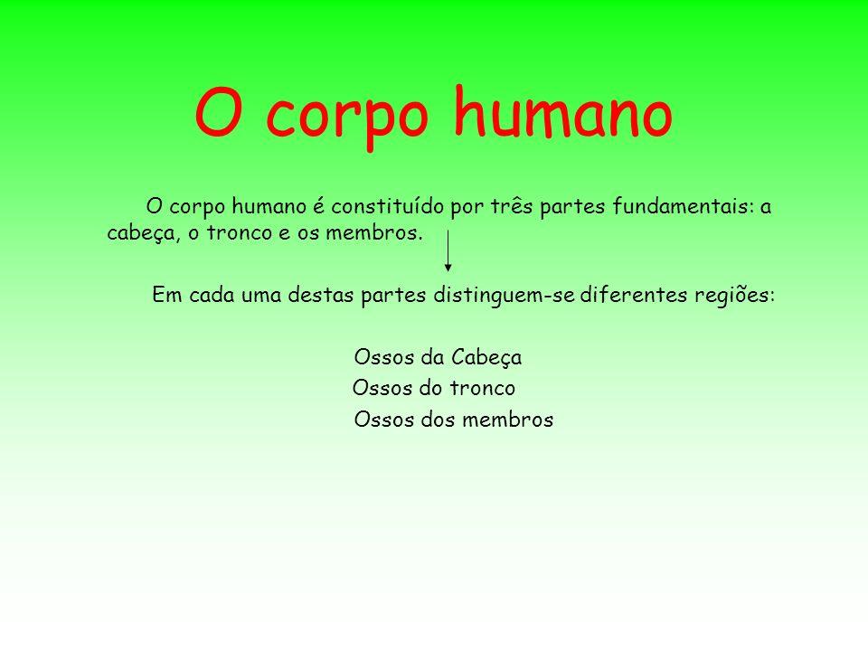 O corpo humano O corpo humano é constituído por três partes fundamentais: a cabeça, o tronco e os membros. Em cada uma destas partes distinguem-se dif