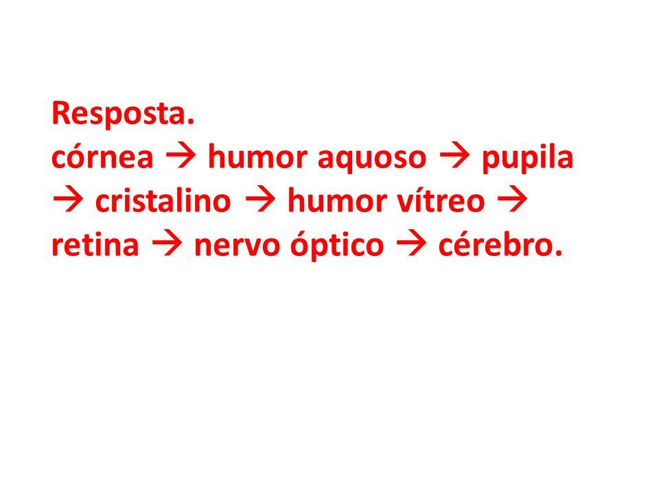 Resposta. córnea humor aquoso pupila cristalino humor vítreo retina nervo óptico cérebro.