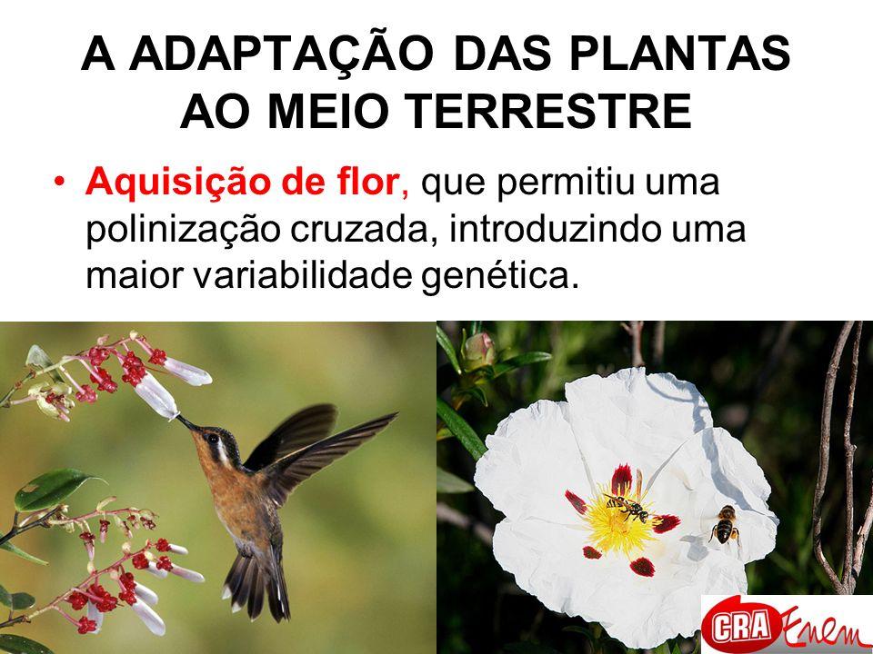 A ADAPTAÇÃO DAS PLANTAS AO MEIO TERRESTRE Evolução da fase esporofítica em relação a gametofítica