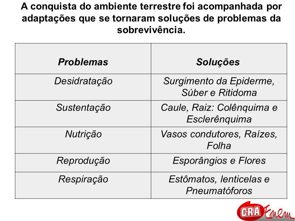 CONQUISTA DO AMBIENTE TERRESTRE PELOS ANIMAIS Exoesqueleto de Quitina –impedir a desidratação.