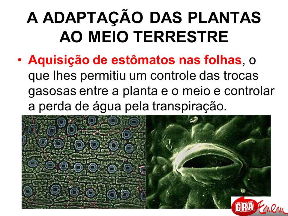 Aquisição de pêlos (tricomas) e acúleos: anexos da epiderme que protegem a planta contra perda excessiva de água por transpiração.