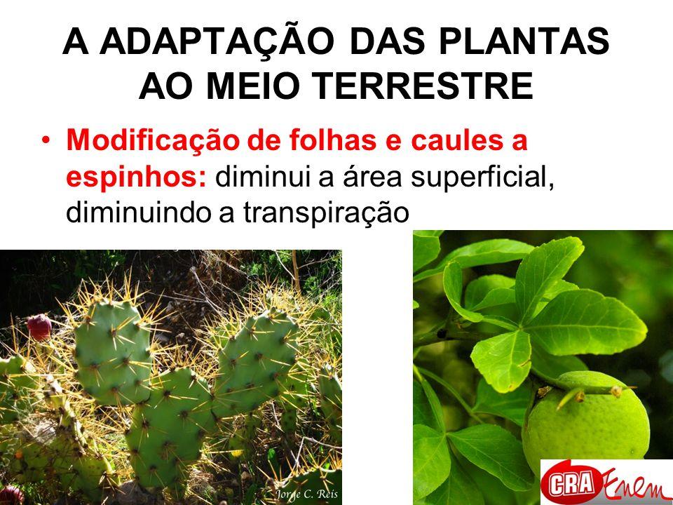 A ADAPTAÇÃO DAS PLANTAS AO MEIO TERRESTRE Aquisição de sementes, que com os seus constituintes protegem o embrião da dessecação e o nutrem.