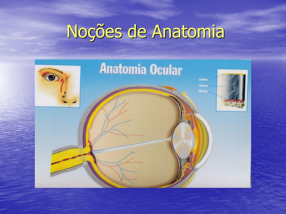Noções de Anatomia Noções de Anatomia