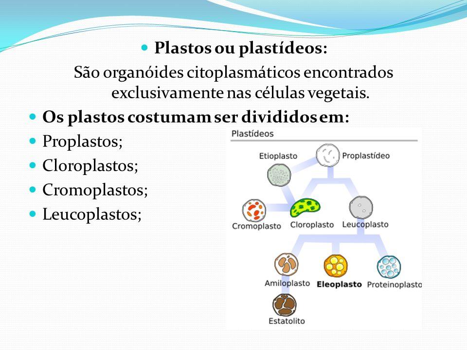 Plastos ou plastídeos: São organóides citoplasmáticos encontrados exclusivamente nas células vegetais. Os plastos costumam ser divididos em: Proplasto