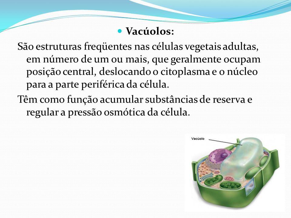 Vacúolos: São estruturas freqüentes nas células vegetais adultas, em número de um ou mais, que geralmente ocupam posição central, deslocando o citopla