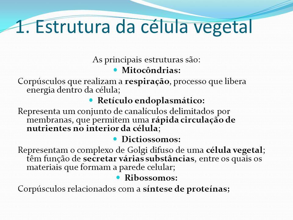 1. Estrutura da célula vegetal As principais estruturas são: Mitocôndrias: Corpúsculos que realizam a respiração, processo que libera energia dentro d