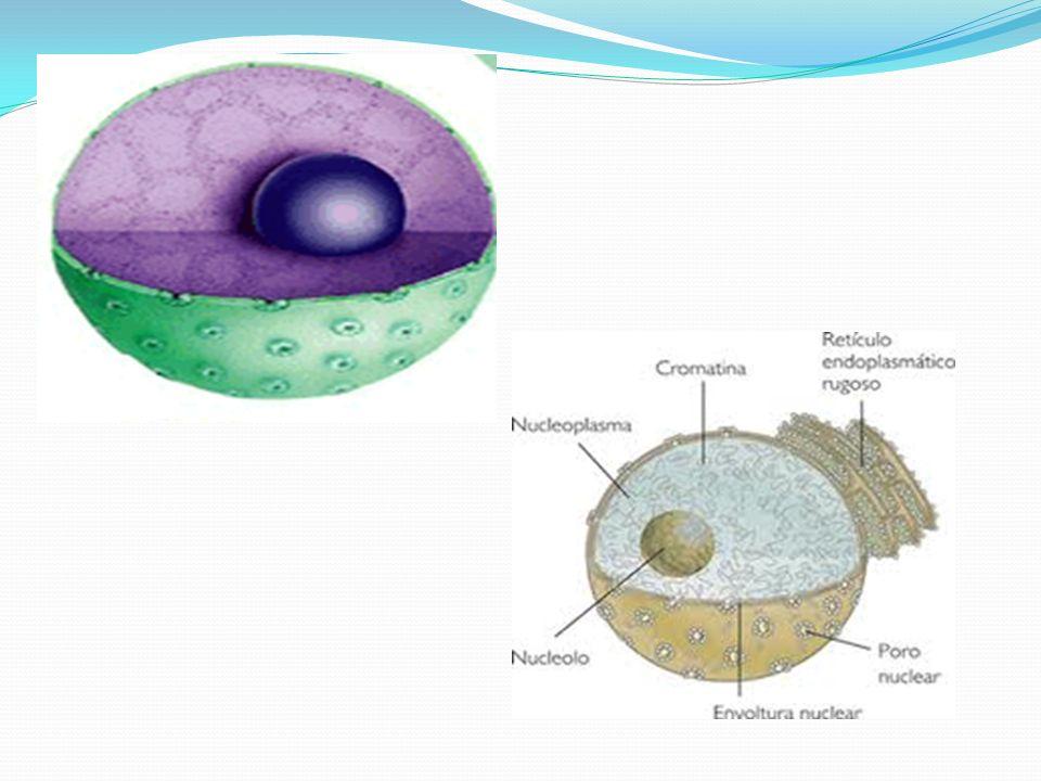 Plastos ou plastídeos: São organóides citoplasmáticos encontrados exclusivamente nas células vegetais.
