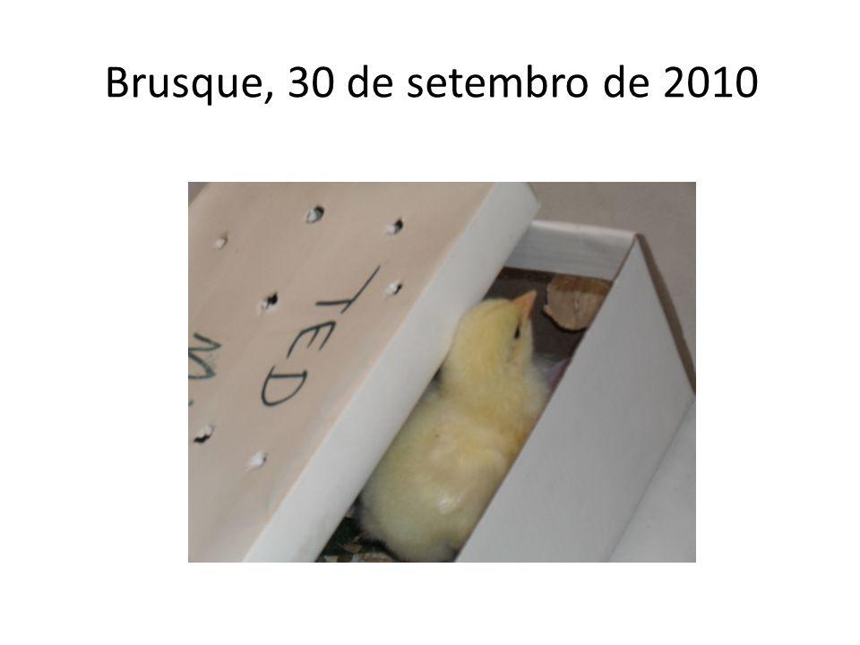 Brusque, 30 de setembro de 2010