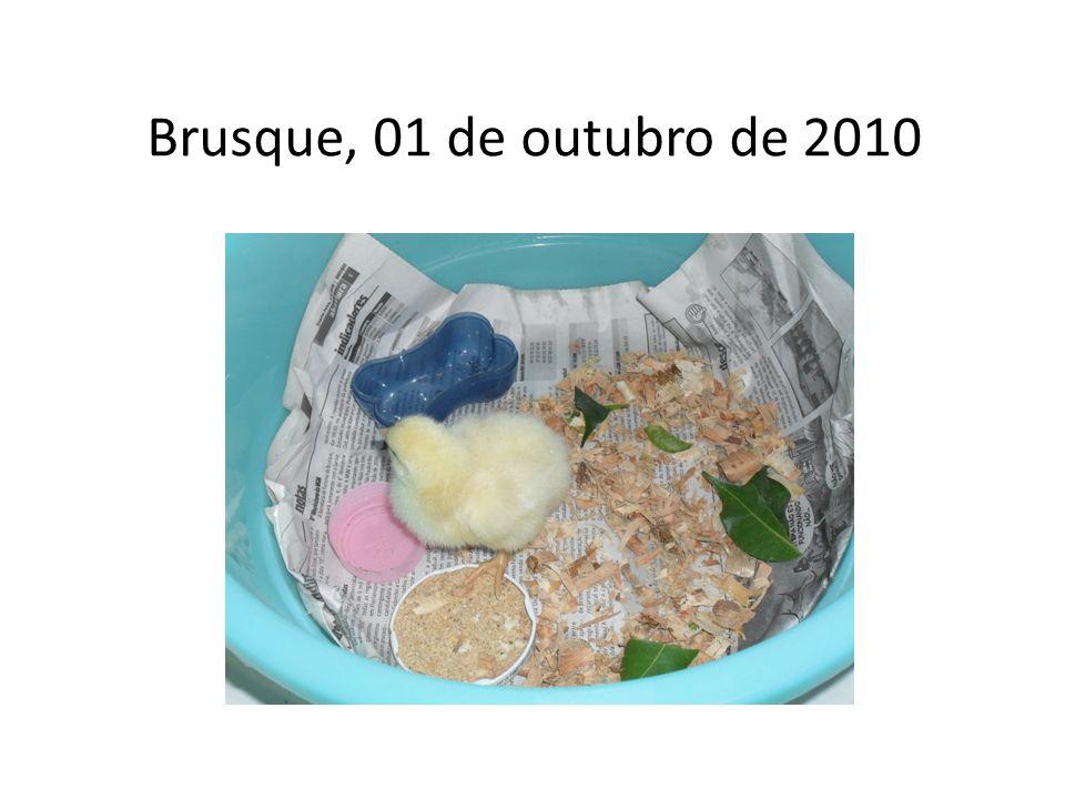 Brusque, 01 de outubro de 2010