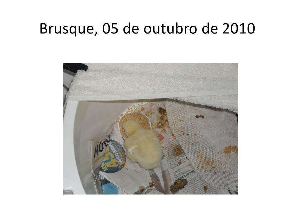 Brusque, 05 de outubro de 2010