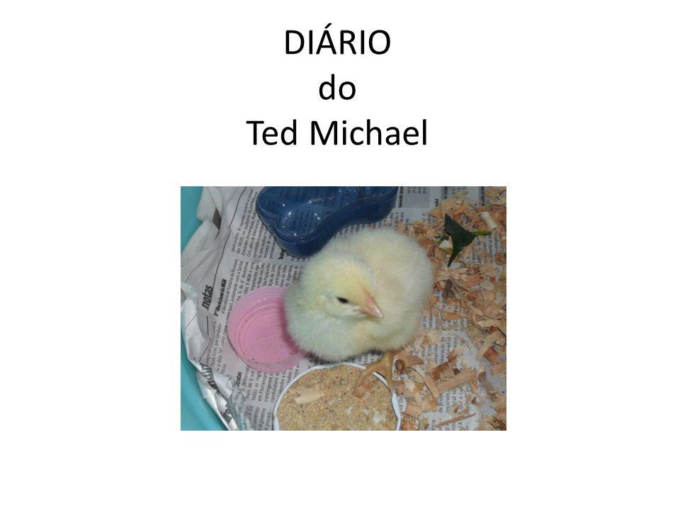 Brusque, 29 de setembro de 2010 Hoje, na escola, eu peguei o pintinho, Ted Michael, que a partir de hoje virou meu filho.