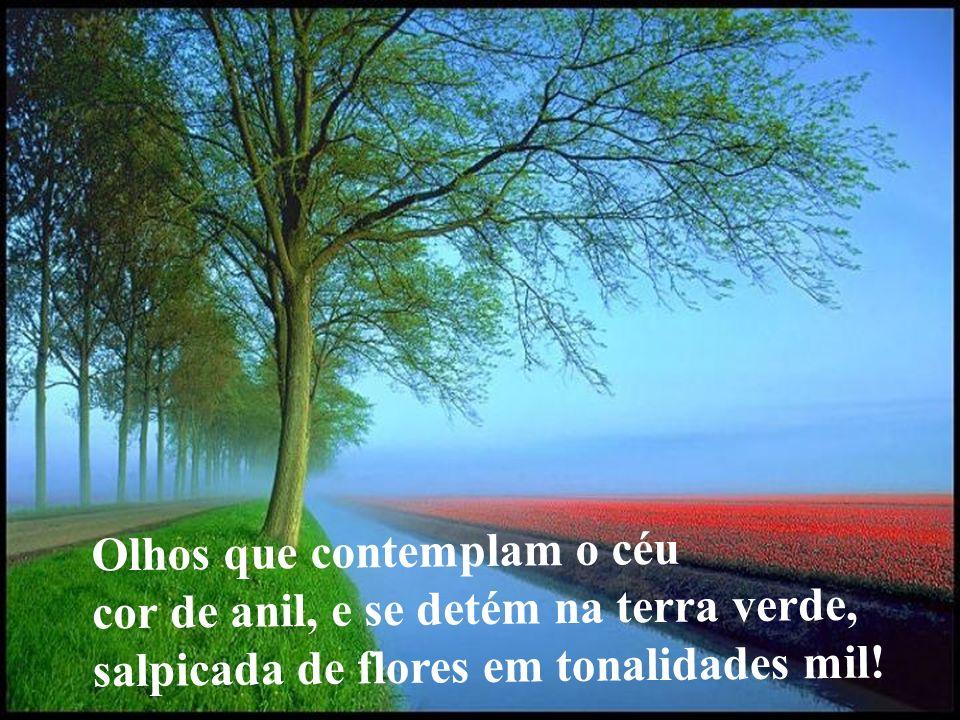 Olhos que contemplam o céu cor de anil, e se detém na terra verde, salpicada de flores em tonalidades mil!