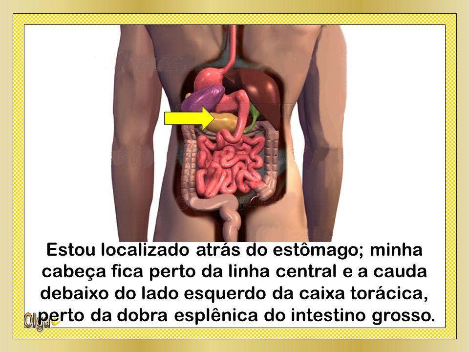 Estou localizado atrás do estômago; minha cabeça fica perto da linha central e a cauda debaixo do lado esquerdo da caixa torácica, perto da dobra esplênica do intestino grosso.