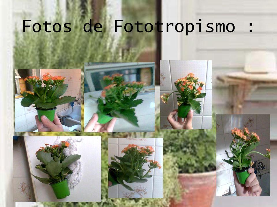 Fotos de Fototropismo :