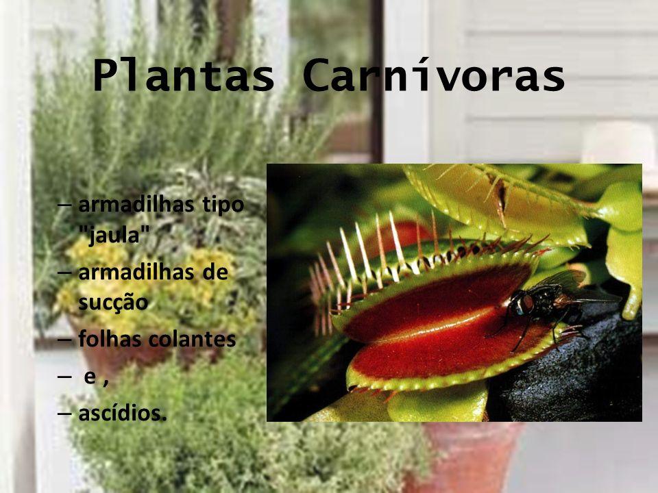 Plantas Carnívoras – armadilhas tipo