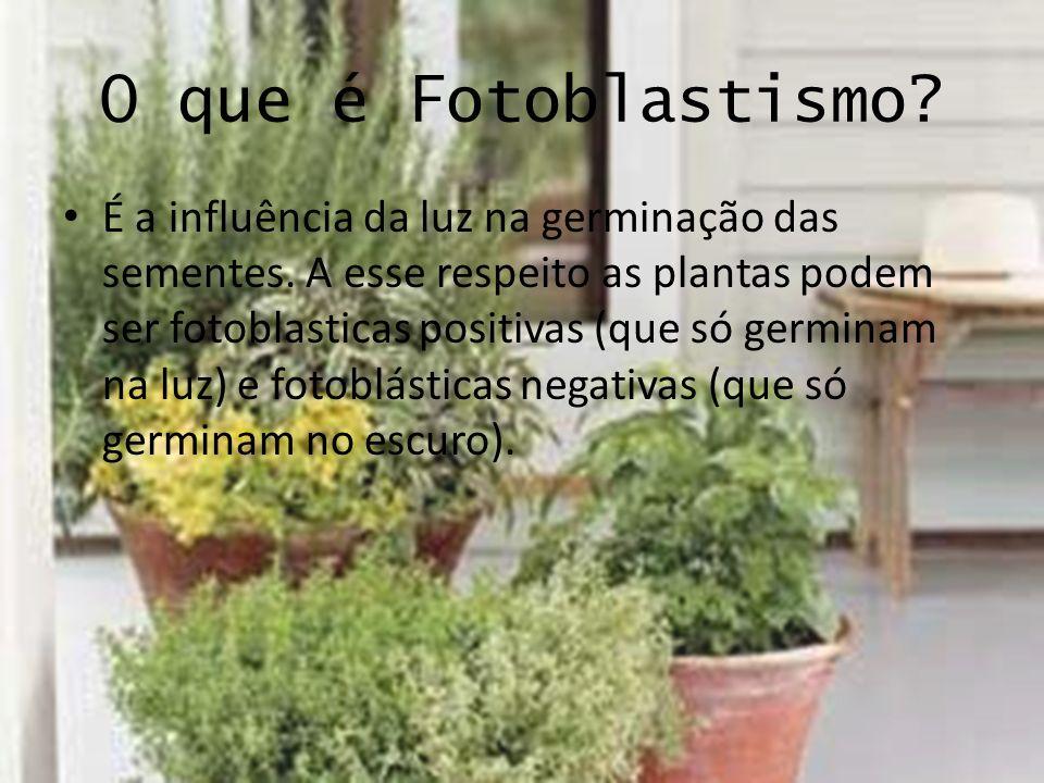 O que é Fotoblastismo? É a influência da luz na germinação das sementes. A esse respeito as plantas podem ser fotoblasticas positivas (que só germinam