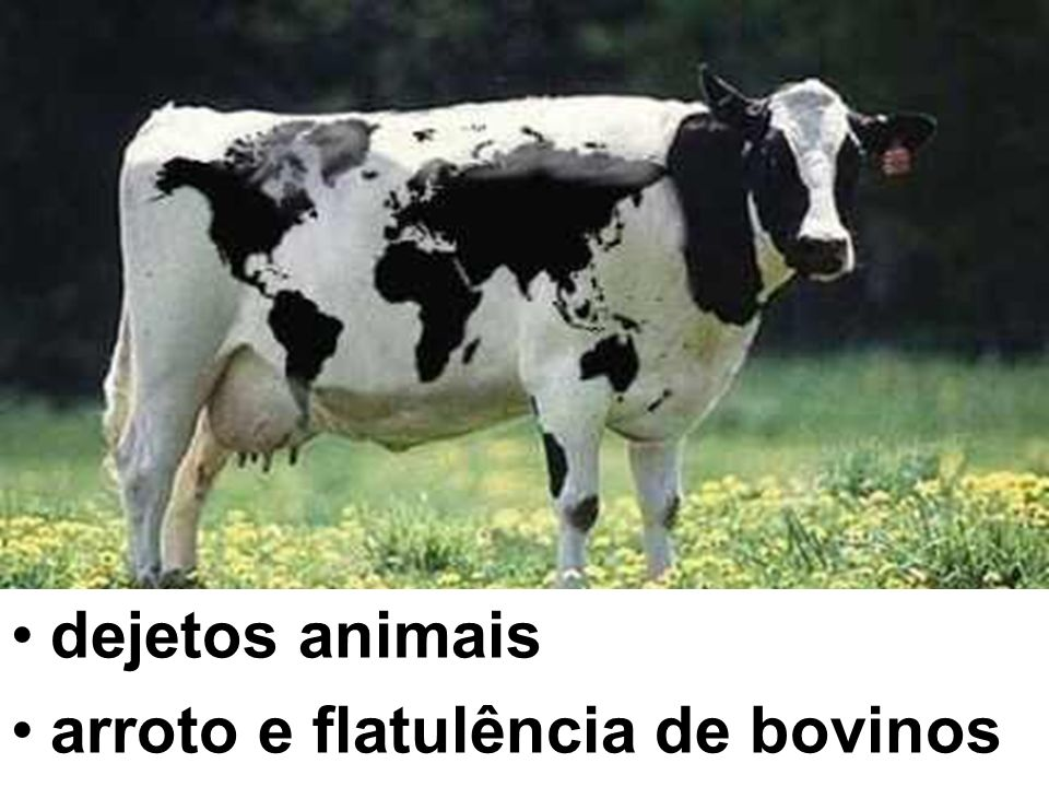 dejetos animais arroto e flatulência de bovinos