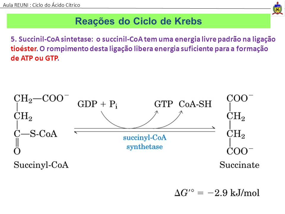 5. Succinil-CoA sintetase: o succinil-CoA tem uma energia livre padrão na ligação tioéster. O rompimento desta ligação libera energia suficiente para