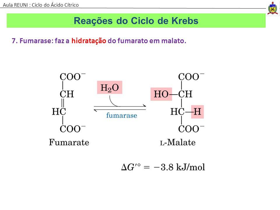 7. Fumarase: faz a hidratação do fumarato em malato. Reações do Ciclo de Krebs Aula REUNI : Ciclo do Ácido Cítrico