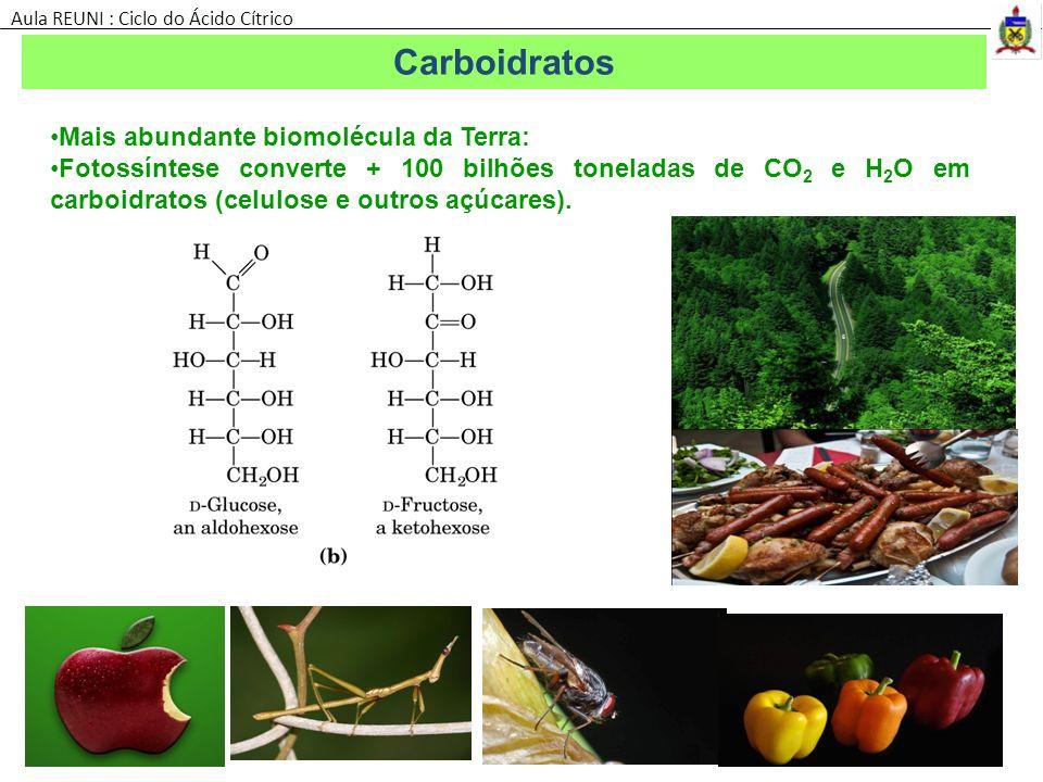 Mais abundante biomolécula da Terra: Fotossíntese converte + 100 bilhões toneladas de CO 2 e H 2 O em carboidratos (celulose e outros açúcares). Carbo