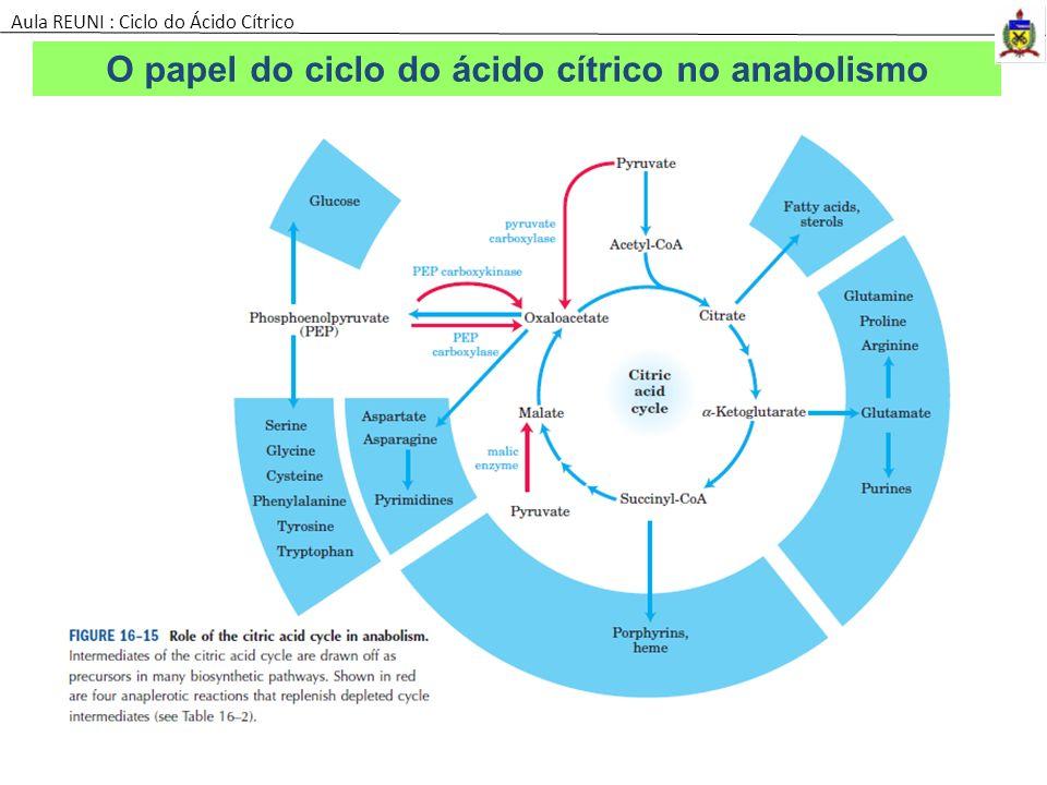 O papel do ciclo do ácido cítrico no anabolismo Aula REUNI : Ciclo do Ácido Cítrico