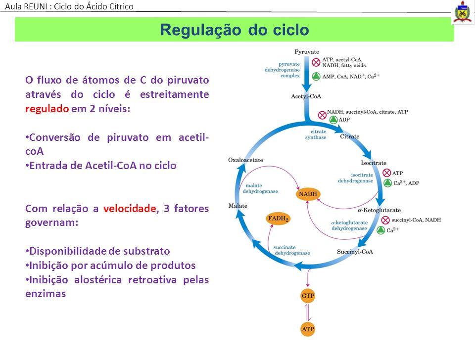 Regulação do ciclo O fluxo de átomos de C do piruvato através do ciclo é estreitamente regulado em 2 níveis: Conversão de piruvato em acetil- coA Entr