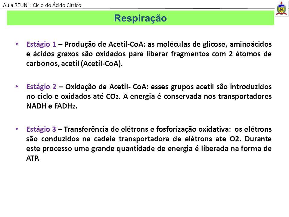 Estágio 1 – Produção de Acetil-CoA: as moléculas de glicose, aminoácidos e ácidos graxos são oxidados para liberar fragmentos com 2 átomos de carbonos