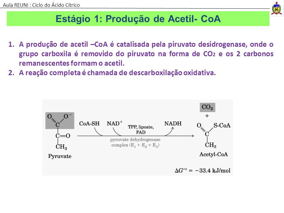Estágio 1: Produção de Acetil- CoA 1.A produção de acetil –CoA é catalisada pela piruvato desidrogenase, onde o grupo carboxila é removido do piruvato