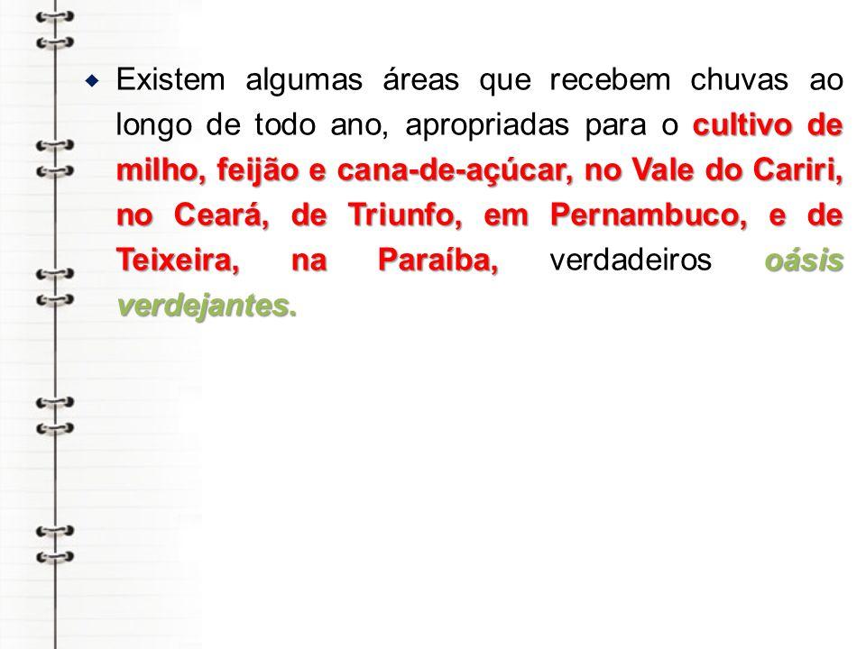 cultivo de milho, feijão e cana-de-açúcar, no Vale do Cariri, no Ceará, de Triunfo, em Pernambuco, e de Teixeira, na Paraíba, oásis verdejantes.