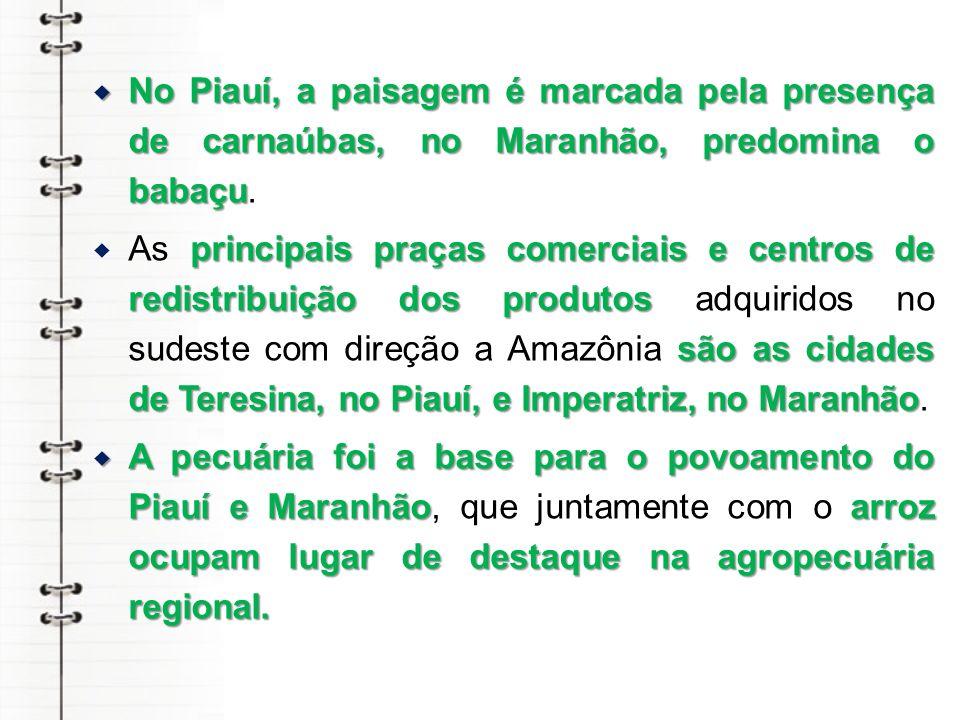 No Piauí, a paisagem é marcada pela presença de carnaúbas, no Maranhão, predomina o babaçu No Piauí, a paisagem é marcada pela presença de carnaúbas, no Maranhão, predomina o babaçu.