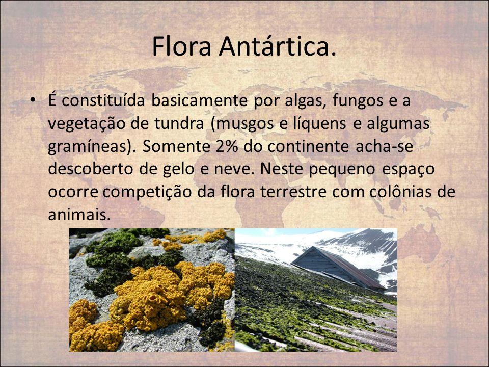 Flora Antártica. É constituída basicamente por algas, fungos e a vegetação de tundra (musgos e líquens e algumas gramíneas). Somente 2% do continente