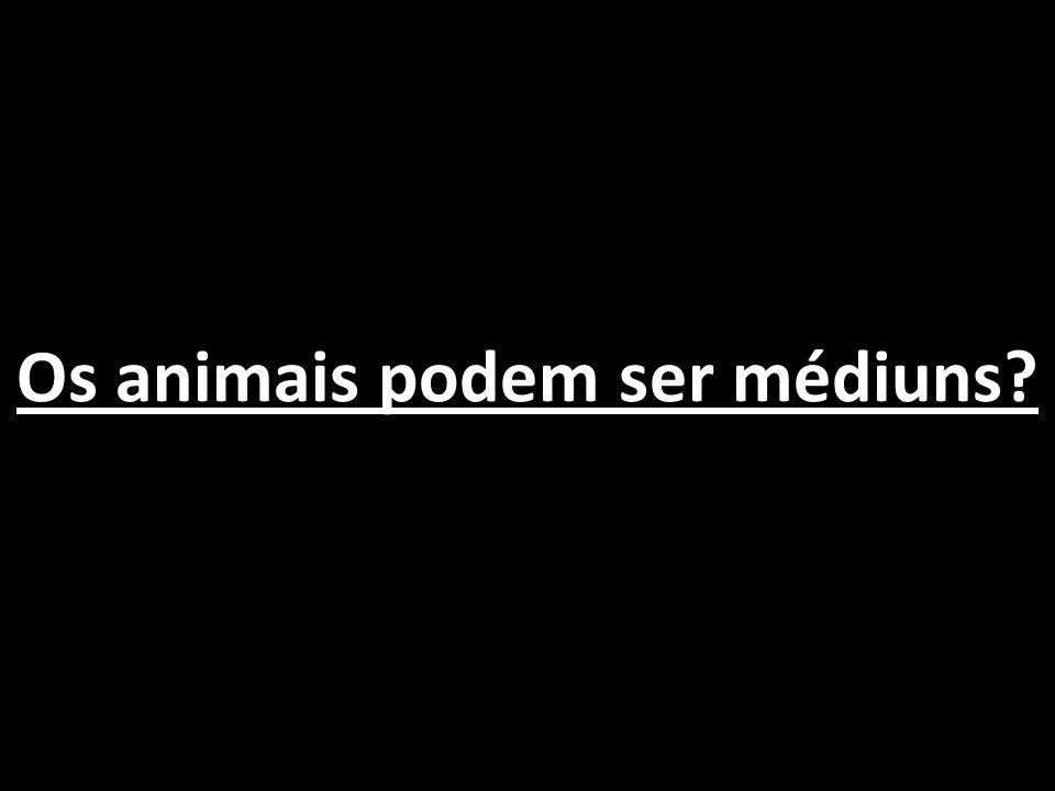 Os animais podem ser médiuns?
