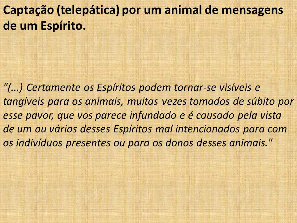 Captação (telepática) por um animal de mensagens de um Espírito.