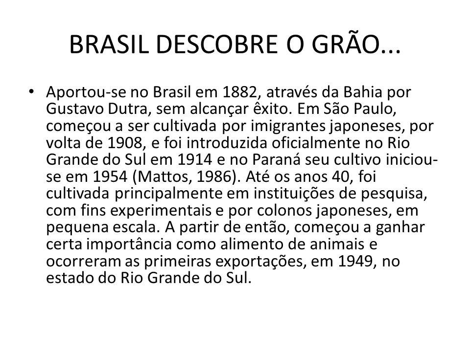 BRASIL DESCOBRE O GRÃO... Aportou-se no Brasil em 1882, através da Bahia por Gustavo Dutra, sem alcançar êxito. Em São Paulo, começou a ser cultivada